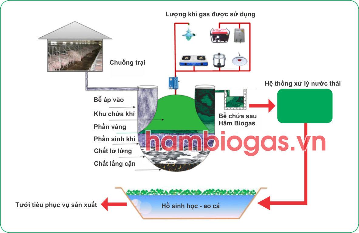 Xử lí chất thải chăn nuôi bằng hầm biogas?